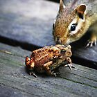 the chipmunk & the toad by Laurie Minor