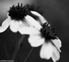 Black Lady by Kornrawiee