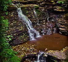 Along the Ganoga Glen Trail by Debra Fedchin