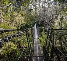 Tahune Suspension Bridge, Tasmania by Russell Charters