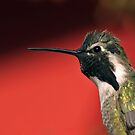 Hummer Portrait with Red Background by Daniel J. McCauley IV