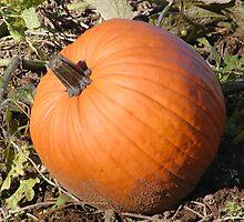Fall Pumpkin Patch by Brad