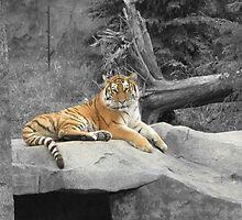 Tiger by cheerishables