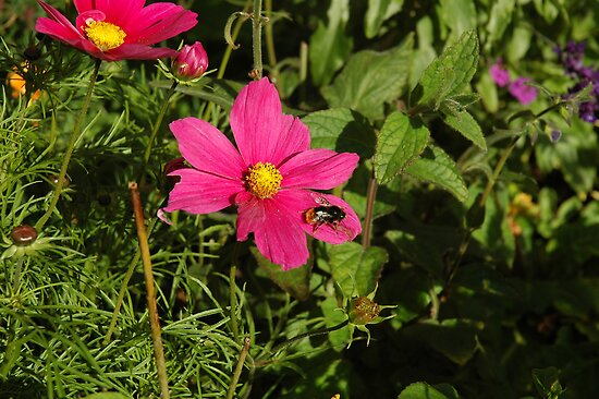 Pink and Bumble Bee by HELUA