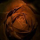 Rose Direct by maverickchild