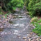 Leith River. Dunedin . New Zealand  by TeeAy