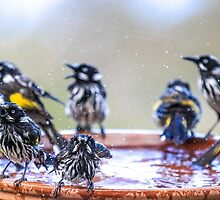 New Holland Honeyeaters Convention by CovePicsTas
