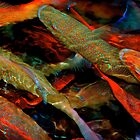 Coral Trout by Lis29