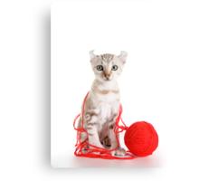 Kitten Caught in the Act Canvas Print