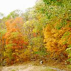 Fall Colors by Sarah Cook