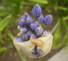 BIRTH OF AGAPANTHUS by gracestout2007