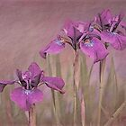 Three Iris' by jules572