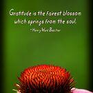 Gratitude by Tanya B. Schroeder