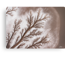 Feathered Riverbed Metal Print