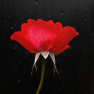 Lipstick red by Rosalie Dale