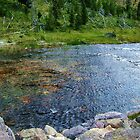 clear brook, rocks and green plants in Yellowstone National Park. by naturematters