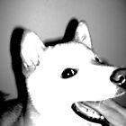 Shiba Inu Portrait by Holleyy