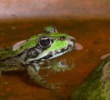 """Chives""  The Star Frog summer in all its forms 8 (c)(t) by Olao-Olavia / Okaio Créations fz 1000 by okaio caillaud olivier"