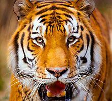 LSU Tiger by damhotpepper