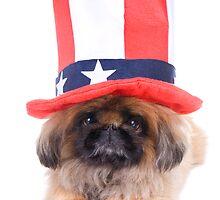 American Dog by idapix