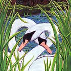 Swans Hello  by Wendy Crouch