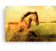 Golden frolic Canvas Print