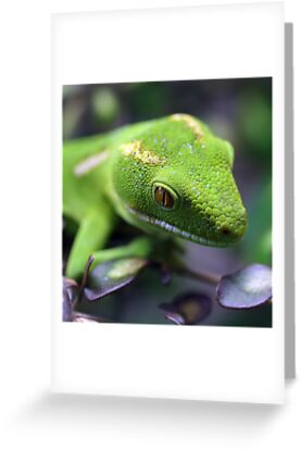 Gecko by Robyn Carter