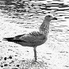 Gull by Wulfrunnut