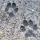 Paws Mark The Spot by Suni Pruett