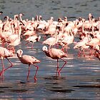 The flamingo shuffle by Sharon Bishop