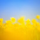 The Daffodil Army 1 by Nick Huggins