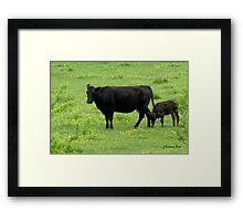 Cow and Calf in a Field of Buttercups  Framed Print