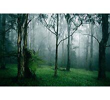 Spring Mist Photographic Print
