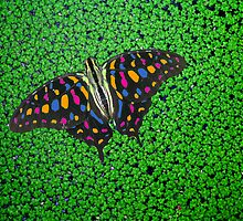 rainbow butterfly by Cornelia Togea