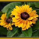 Rudbeckia I by Cheri Perry