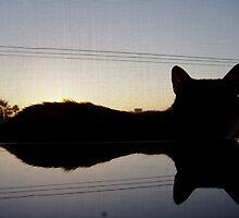 Pixie the Cat part 2 by Danielle Emerick