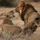 Roar Passion by Steve Bulford