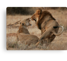 Roar Passion Canvas Print