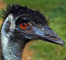 Emu by Aussiebluey