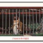 I want to be free by Johninmula