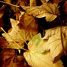Autumn Leaves falling; Crunching under foot... by Jenny Haskey