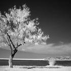 Solitude by deividmx