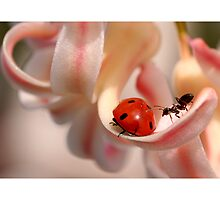 The ant and the ladybug. by Ellen van Deelen