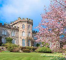 Cholmondeley Castle and Cherry Blossom by Joe Wainwright