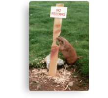 Clever Critter Canvas Print