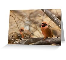 Southern Red Bishop Greeting Card