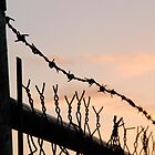 Barbed Wire Sunset by Gabriel Martinez