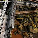 Wood and Rocks by Tim Yuan