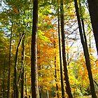Autum Begins by forestphotos