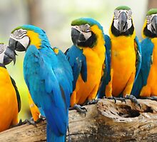 Parrots by ArtItaly
